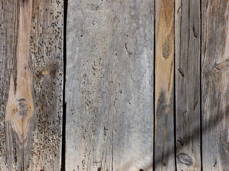 Disinfestazione tarli: i metodi infallibili con cui preservare il legno